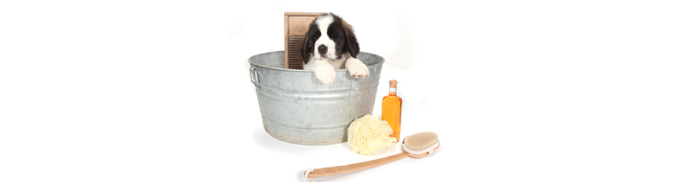 General Image - Puppy in Bucket